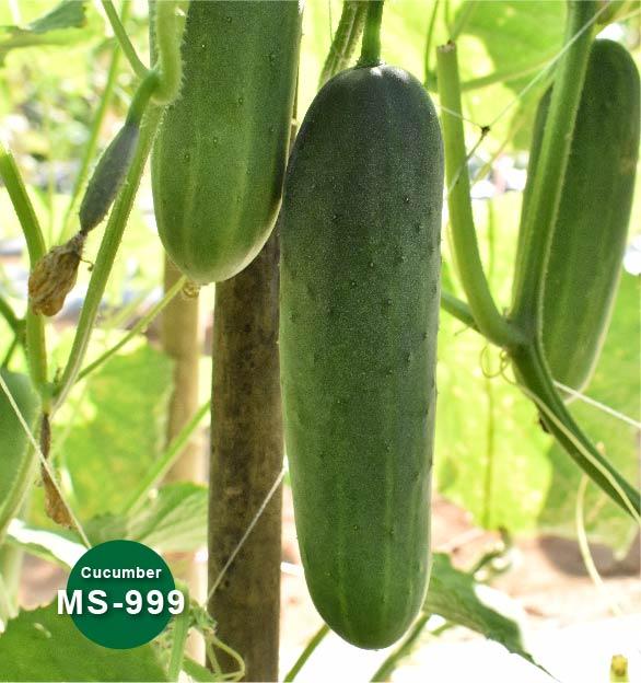MS-999